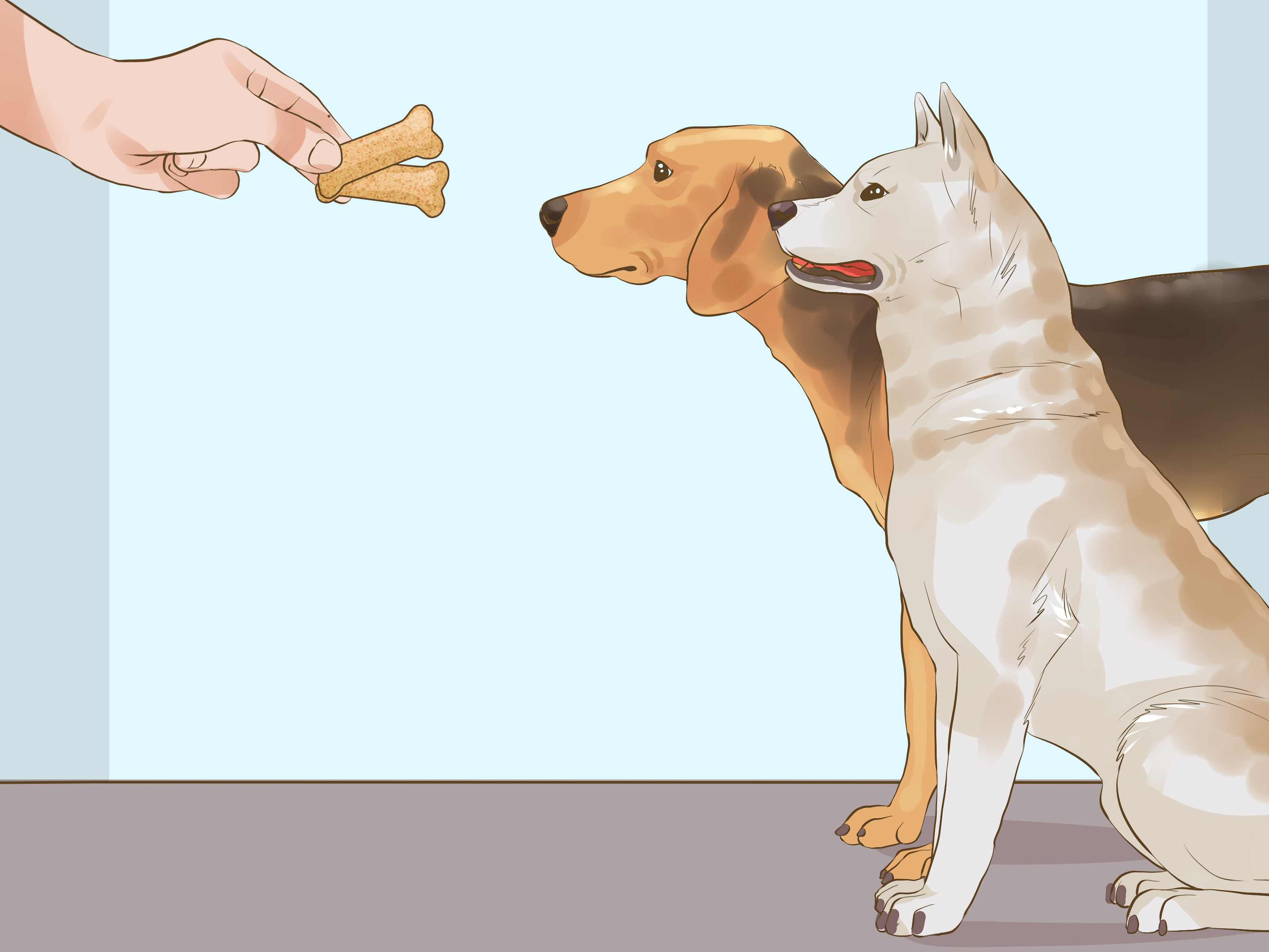 Companion Dog Letter Template - 3 Ways to Get A Panion Dog for An Existing Dog Wikihow